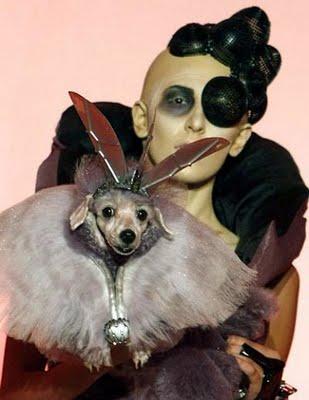 pets_fashion_01