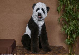 Panda + Poodle = Panoodle?